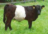 Den heifer 10 months
