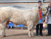 Glen Ivan 2 VAK son Res Champion Tullamore Nov 14